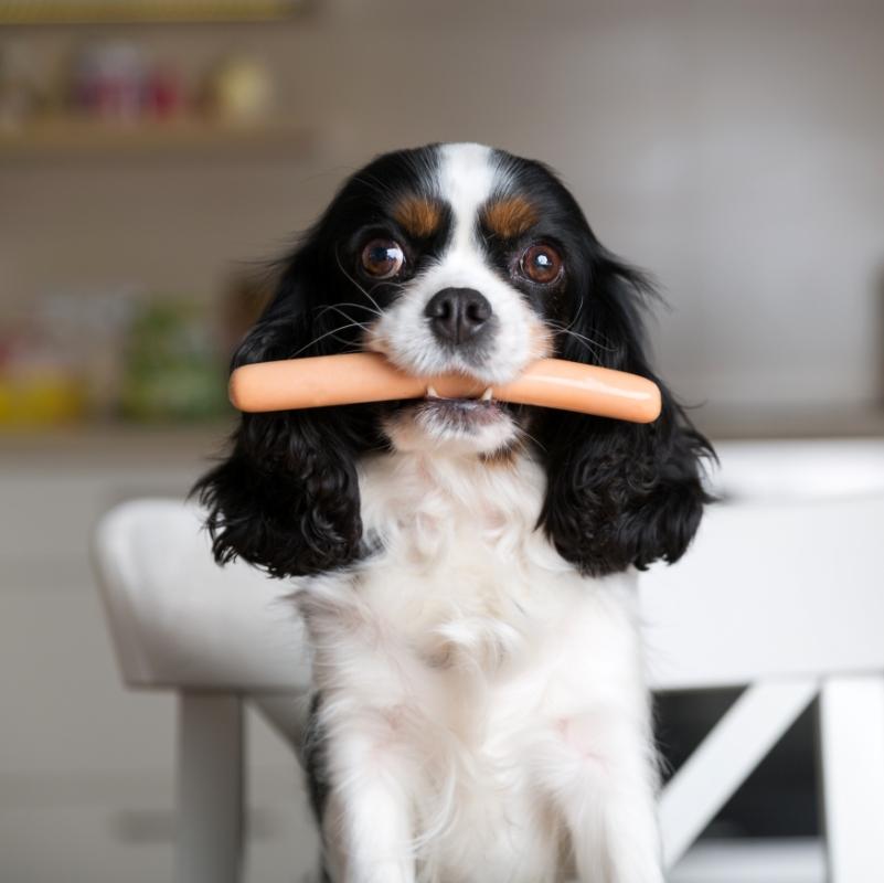 Hundefutter mit hohem Fleischanteil