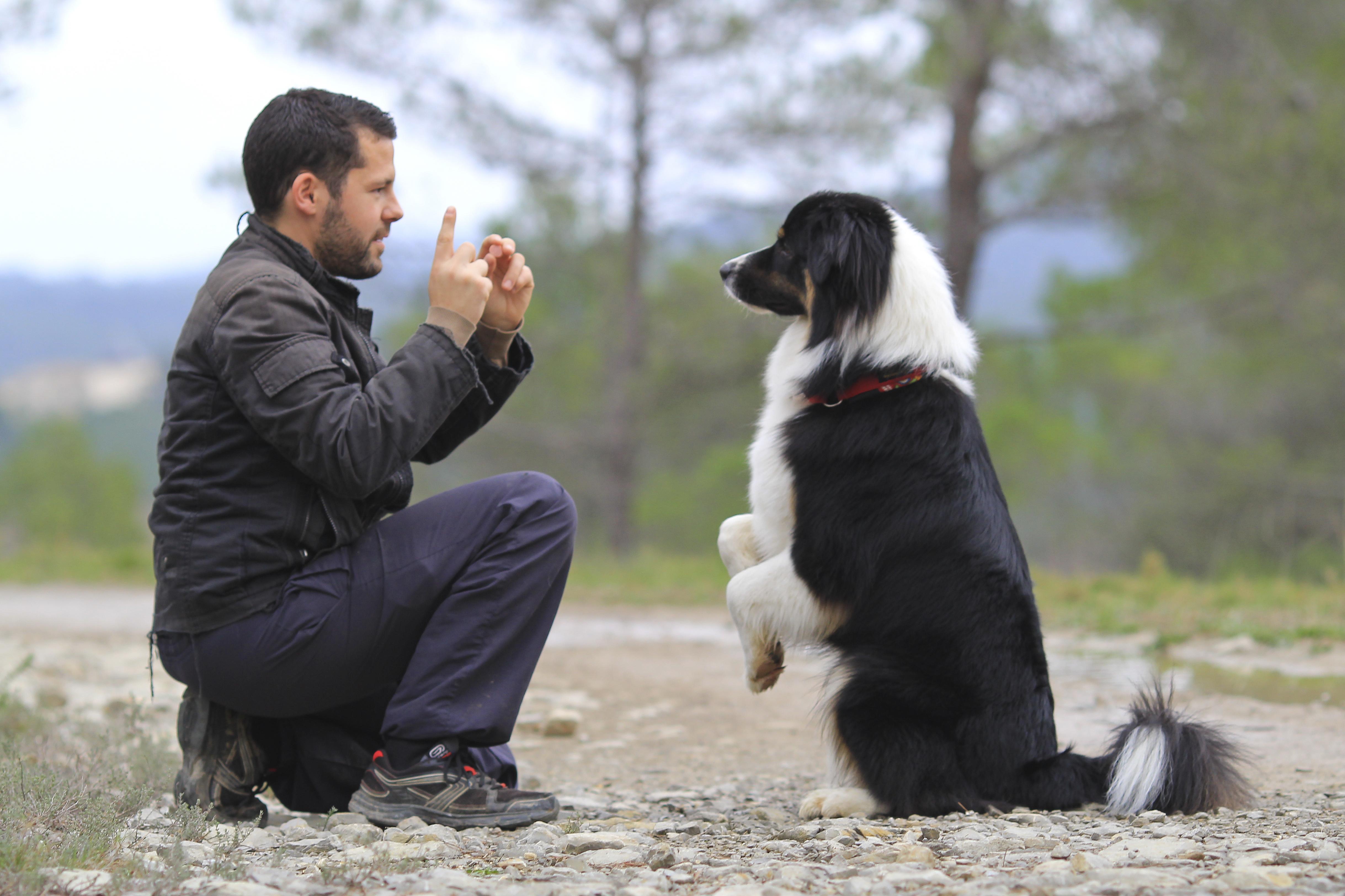 Futtergabe in der Hundeausbildung
