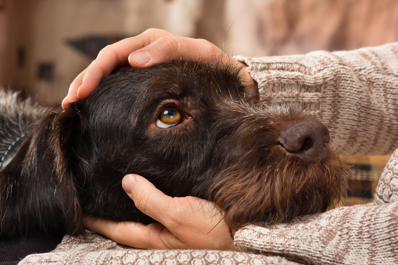 Lebensmittel, die giftig für den Hund sein können